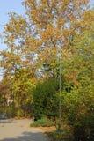 парк в ноябре Стоковые Фото