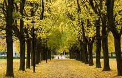 Парк в октябре Стоковое фото RF