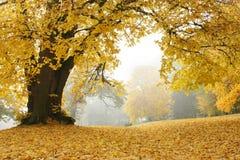 Парк в осени Стоковые Фотографии RF