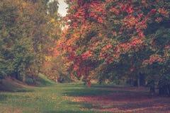 Парк в осени Стоковые Изображения