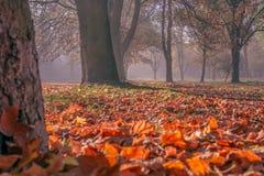 Парк в осени Стоковая Фотография RF