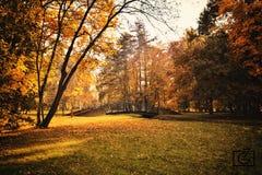Парк в осени Стоковое фото RF