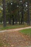 Парк в падении вполне с листьями Стоковые Изображения