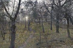 Парк в темноте Стоковое фото RF