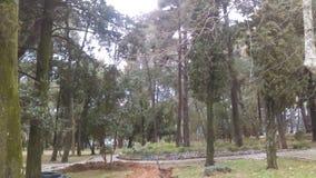 Парк в Черногории Стоковые Изображения RF