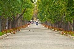 Парк в cluj-Napoca Стоковая Фотография