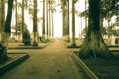 Парк в Puerto Limon стоковые изображения