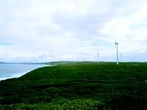 Парк генератора ветровой электростанции Albany эоловый, Австралия стоковые изображения