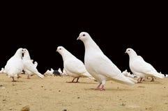 Парк голубя публично Стоковое Фото