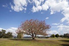 Парк города Брисбена стоковое фото