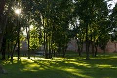 Парк города, выравнивая солнечный свет выходить деревья Стоковая Фотография