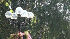 Парк города в Киеве видеоматериал