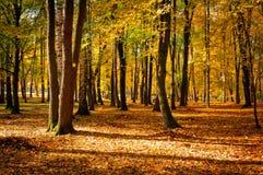 Парк города в осени Стоковая Фотография