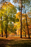 Парк города в осени Стоковые Фотографии RF