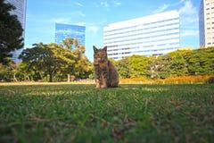 парк города кота Стоковые Фотографии RF