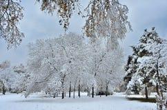 Парк города осени под первым пушистым снегом стоковая фотография
