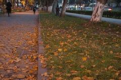 Парк города осени посыпанный с упаденными листьями и деревьями желтого цвета Стоковая Фотография