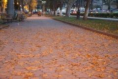 Парк города осени посыпанный с упаденными листьями и деревьями желтого цвета Стоковые Фотографии RF