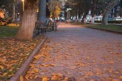 Парк города осени посыпанный с упаденными листьями и деревьями желтого цвета Стоковое фото RF
