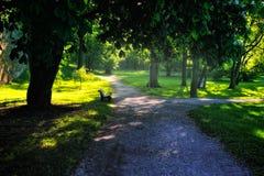 парк города Стоковое Фото