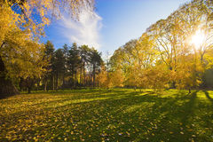 парк города Стоковые Фотографии RF