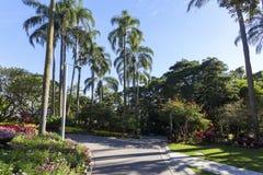 Парк города Брисбена стоковые фотографии rf