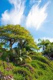 Парк города в городе Тенерифе, Канарских островах, Испании Стоковые Фото