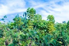 Парк города в городе Тенерифе, Канарских островах, Испании Стоковые Изображения