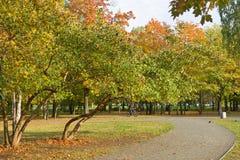Парк города осени стоковые изображения