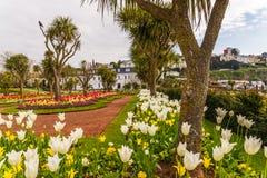 Парк города с экзотическими деревьями и сериями цвета цветет, wonderf Стоковое фото RF