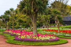 Парк города с экзотическими деревьями и сериями цвета цветет, wonderf Стоковые Изображения RF