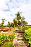 Парк города с экзотическими деревьями и сериями цвета цветет, wonderf Стоковые Фото