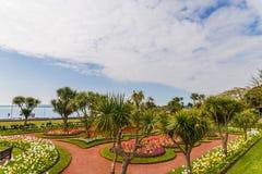 Парк города с экзотическими деревьями и сериями цвета цветет, wonderf Стоковое Фото
