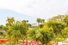 Парк города с экзотическими деревьями и сериями цвета цветет, wonderf Стоковое Изображение RF