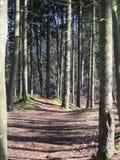 Парк горы в осени Стоковое Изображение