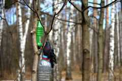 Парк голубя весной Стоковая Фотография RF