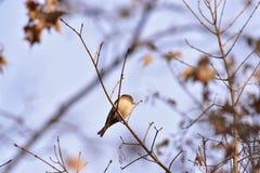 Парк для того чтобы принять различные формы воробьинообразных птиц стоковые фотографии rf