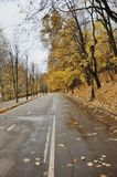 парк дня осени яркий Стоковое Изображение