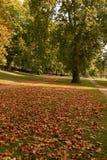 парк дня солнечный Стоковое Изображение RF