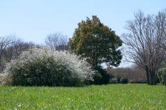 Парк дерева публично Стоковые Изображения RF