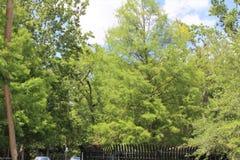 Парк дерева Sanford Fl большой Стоковое фото RF