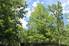 Парк дерева Sanford Fl большой Стоковые Изображения RF