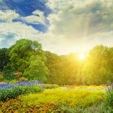 Парк лета с красивыми flowerbeds стоковое изображение rf