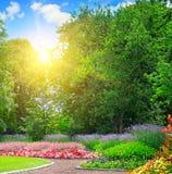 Парк лета с красочными цветником и восходом солнца на голубом небе стоковая фотография rf
