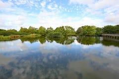 Парк заболоченных мест Wakodahatchee, birding положение Стоковая Фотография RF