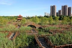 Парк заболоченного места Стоковые Изображения