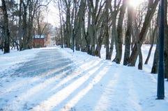Парк зимы в дне Стоковое Изображение