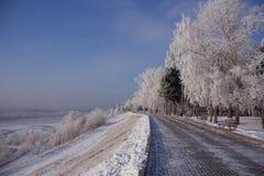 Парк зимы в Сибире Стоковые Фото
