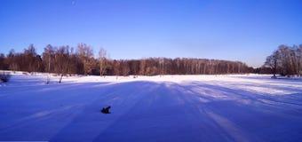 Парк зимы в снежке Стоковое Изображение