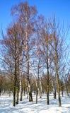 Парк зимы в феврале 2018 стоковые изображения rf